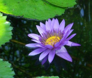 デートした公園の池の花