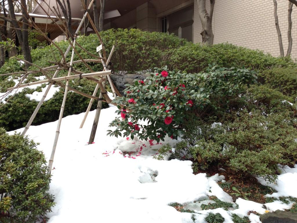 品川プリンスホテルさくらタワーの庭