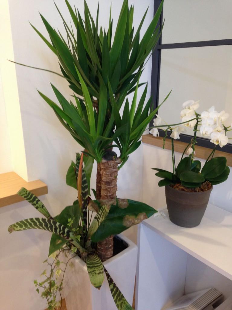 スタジオ写真の植物
