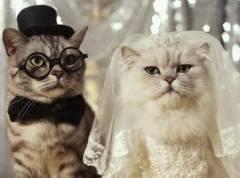 猫の結婚式