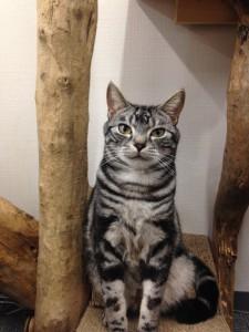 写真スタジオT2の猫