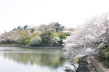 春よ来い~婚活応援~
